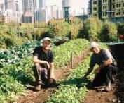 Urban Farming / by S.W.Q.V. Garden