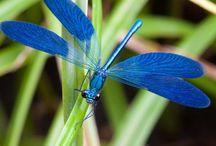 soar like a dragonfly / by nina