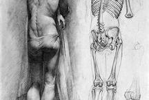 İskelet&Skeleton