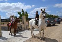 Instalaciones y Animales / Conoce nuestras instalaciones y nuestros animales
