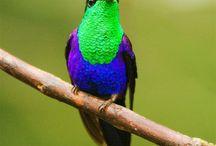 Costa Rica / Wishlist birds, scenic areas, things to do, etc...