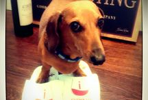 Sipping with Slippers  wine reviewers team / Sipping with Slippers team - #originalsip, #sneakysip , #oversip and their wine dog #Gewürztraminer #wienerdog . Learn about rose, red, white and sparkling #wines from around the world
