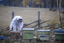 Mehiläistarhaus