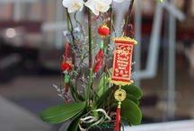 Tết flowers / - Flowers for Tết - Beautiful flowers - Tết flowers in Vietnam