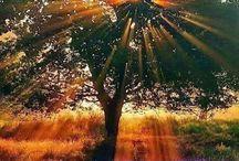 SUN LİFE