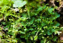 Mechorosty / Herbář pro přírodopis