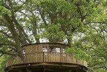 Casette su alberi