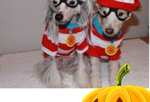 Scaredy Cats & Spooky Pooches! / VetsToronto is getting ready for Halloween and we've added some spooky picture frames for your pet pictures to our app.   Send us your spooktacular photos and maybe you'll be the $100 Amex Gift Card winner for submitting your pet pix through our app!  ----->Get our App on iTunes  itunes.apple.com/us/app/vetstoronto/id897099232?mt=8   ----->Get our App on Google Play  play.google.com/store/search?q=vetstoronto