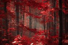 Trees/leaves etc