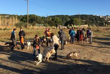 II Canicross PETJADES (Mataró) / Segunda edición de la Canicross y IV Caminada Canina PETJADES para la Sociedad Protectora de Animales de Mataró (SPAM)