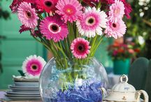 Warm Winter /  Winter time with pink gerberas that have been used for home decoration and inspiration