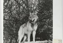 Wildlife in National Archives Records / Wildlife images held at the National Archives