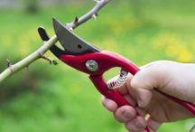 Gärtner Tipps / Wissenswertes und Nützliches für Gärtner und solche, die es noch werden wollen.
