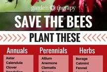 Save the bees by planting these plants