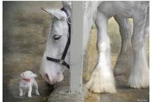 Horses / by MVS Troika
