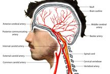 Hemodinamica Cerebral
