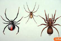 Как лечить укусы паука