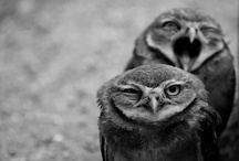 Whooo Are You / by Zuleka Blue