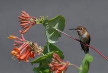 Hummingbirds / by Dee Guile