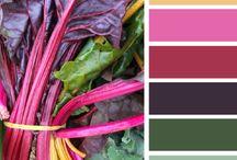 Colors / by Patricia Domenici