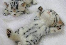 gatinho feltro