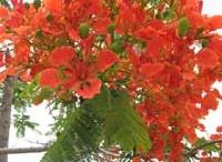 Egypt plants