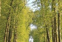 view corridor
