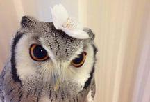 owl ミミズク