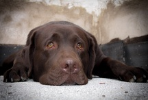 Dogs / by Stacy Ludden