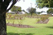 Elizabeth Park Rose Gardens / The Elizabeth Park Rose Gardens was the site of Maryborough's second official cemetery, which closed in 1873. As the town expanded the cemetery was deemed a public health risk, and by 1907, moves were made to remove headstones and remains to the new cemetery. In 1921, the land was converted to a public park, and now is full of beautiful rose gardens. Also known previously as Coronation Park.