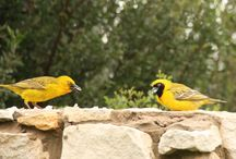 Birdlife at the Nursery