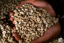 Colombian Coffee Processes