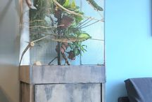 Chameleon terrarium ideas