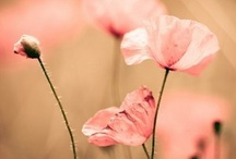 Tickled PINK / by Isabelle Adams
