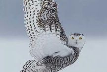 Awesome Animals