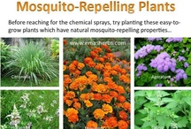 Mesquite repelling plants