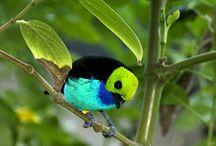 Люсинэ / Птицы вышивка украшения