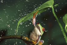 Amphibians & reptiles  / by Christie Jarred