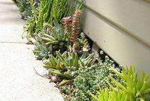 succulents gardens