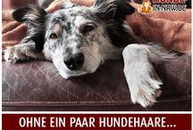 Sprüche Hunde-in-NRW / Sprüche über Hunde, die unter das Fell gehen - hier stellen wir euch witzige, interessante und originelle Sprüche rund um den Hund zusammen. Vielen Dank fürs folgen :)