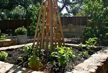 Vegetable gardens / by Glenny Bowes