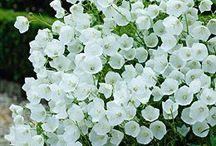 garden♡♡♡my garden / Peysaj ve çiçekler