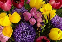 Gifts Under $50 / Great gift ideas under $50. / by ProFlowers
