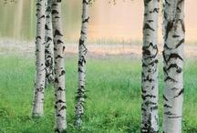 Summer in Finland/ Suomen kesä/ Cottage life style / Love , love, love the Summer...