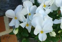 Mein Garten-Glück ♥