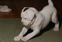 psi - nezvyklé zbarvení