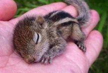 Cute adorable