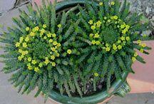 Succulents & indoor plants