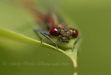 insects...i love..