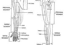 Knee Injury exercises: Improve my flexability